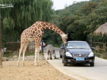 《外地车辆周五进入杭州野生动物园有限行吗? 》