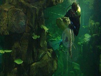 驴友这样评价无锡海底世界 动物园里面的动物都很好看,还有海狮表演