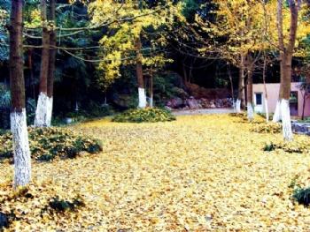 罗浮山中洋仙泉酒店景点图片