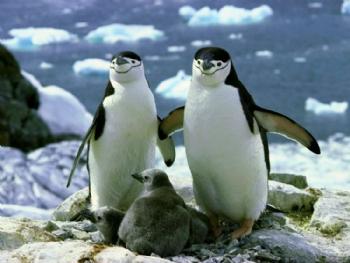 圆形 企鹅头 头像