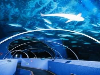壁纸 海底 海底世界 海洋馆 水族馆 350_263