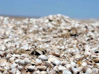 这贝壳堆出的壮观,不像大海边一个浪一个浪推上沙滩,那些星星点点的螺