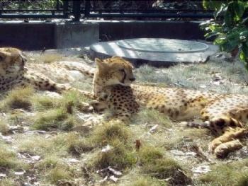 长沙长沙生态动物园门票团购_自驾车路线_长沙生态动物园攻略