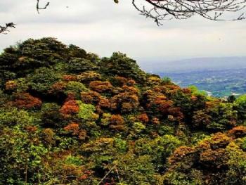 重庆中国茶山竹海国家森林公园门票团购_自驾车路线_攻略图片