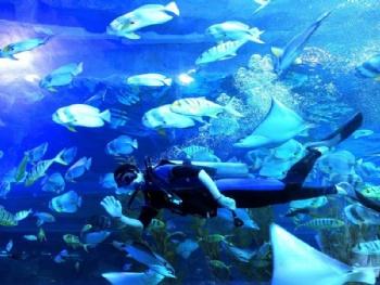 皇家极地海洋世界汇集了来自世界各地的极地动物:白鲸,宽吻海豚,海象