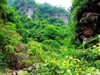 广西龙潭国家森林公园门票