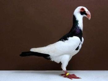 宁波雅戈尔动物园 游玩景点宁波雅戈尔动物园   鸽子象征着