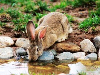 空铁驴友这样评价济南跑马岭野生动物世界 动物很可爱,有很多很珍贵