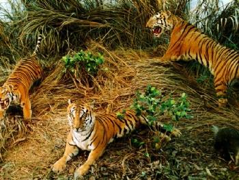 是我国综合自然保护区之一