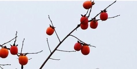 桃花灯笼步骤图解