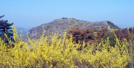 仰天山黑松林是石灰岩地区的奇观