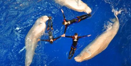 大型海洋动物表演与水族