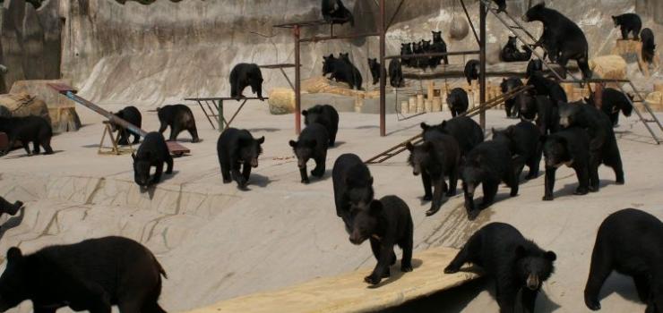 预订 所在地区:山东青岛  山东省青岛市崂山路1号 景点介绍 去熊牧场