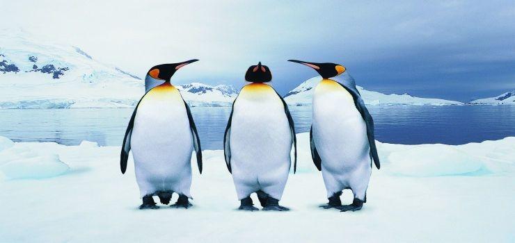 蓬莱海洋极地世界动物种类繁多