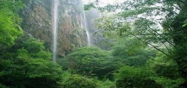 宜昌市森林野生动物园分享展示