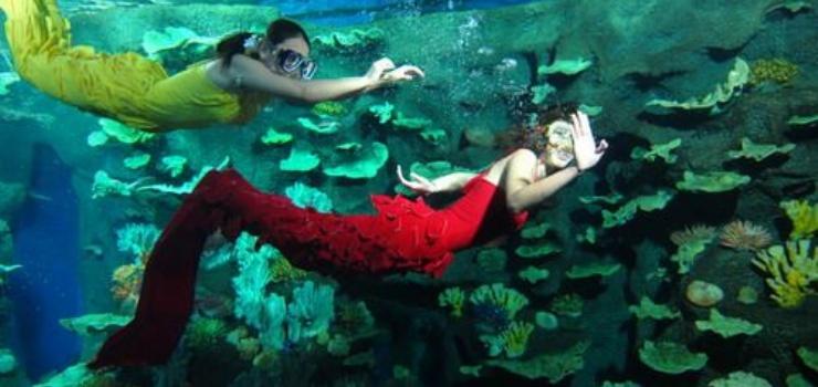 游玩景点青岛海底世界   在海底世界的隧道展池区域与海洋生物展示