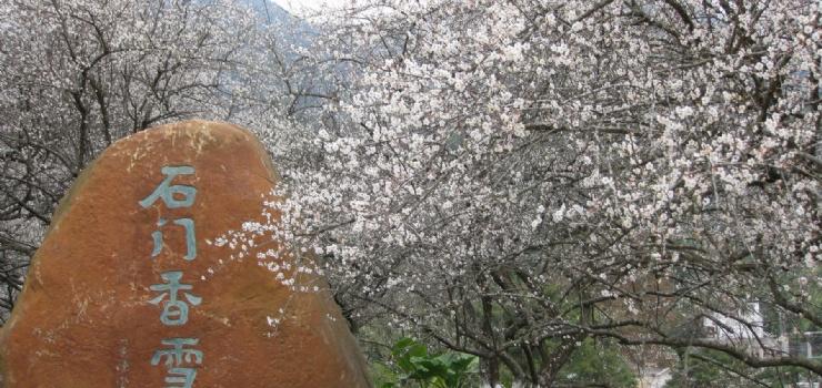 身处如斯美景,仿若穿越时空置身北海道富良野的七彩花海童话世界.