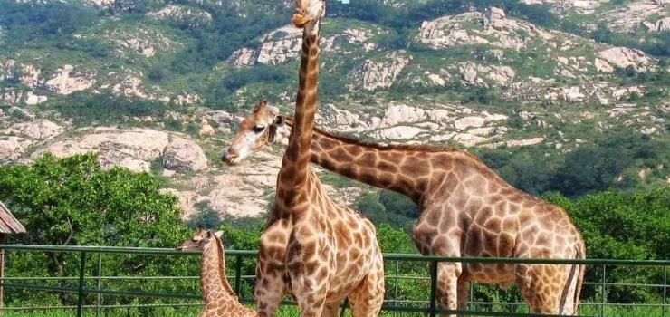 青岛森林野生动物世界景点图片