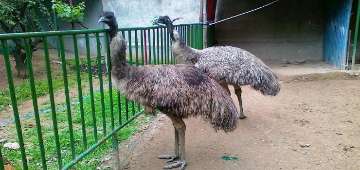 游玩景点义乌市稠州公园   义乌稠州公园动物园是义乌或浙中范围动物