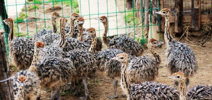 济南跑马岭野生动物世界景点图片