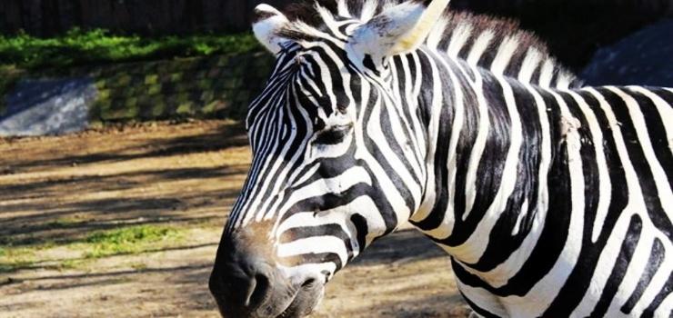 同程驴友这样评价济南跑马岭野生动物世界 动物很可爱,有很多很珍贵