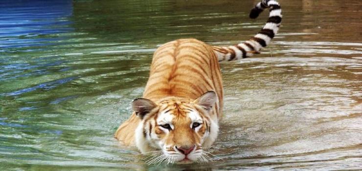 济南跑马岭野生动物世界门票预订
